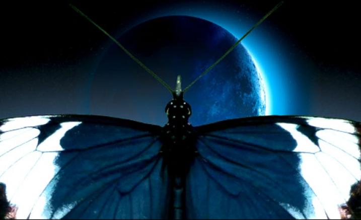 Sappho's Butterflies