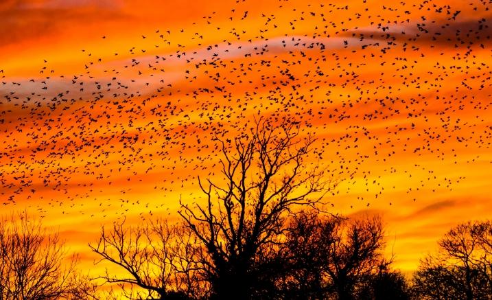 Thirteen Ways to Look At Birds