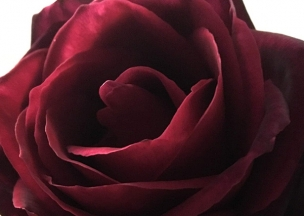 Myrtle_&_Roses.jpg