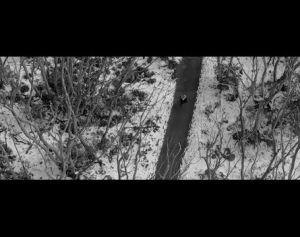Woodes - The Thaw (Official Music Video)